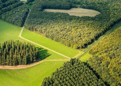 Almeerderhout