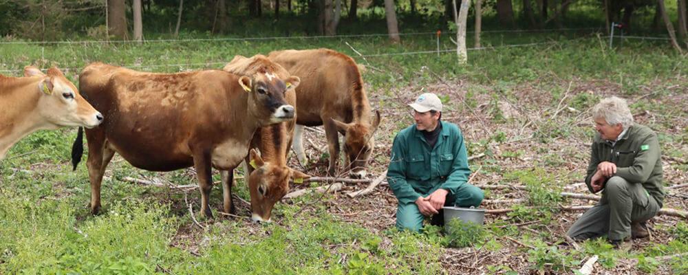 Boeren zitten naast koeien